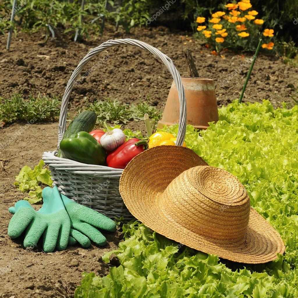 Basket of vegetables freshly picked in the garden