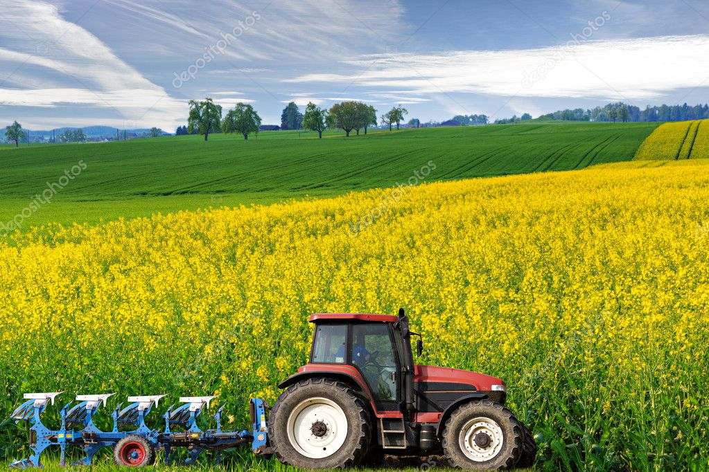 Tractor in canola field