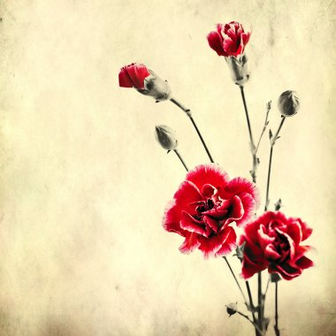 Old paper background with red carnations