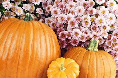 Pumpkins and Chyrsanthemums