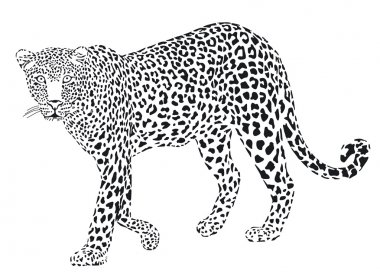 Leopart black on a white background