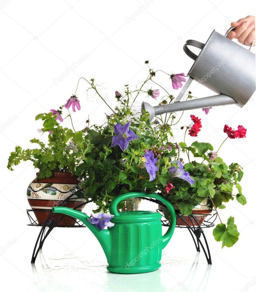 bewässerung von zimmerpflanzen — stockfoto © natlit #7387558