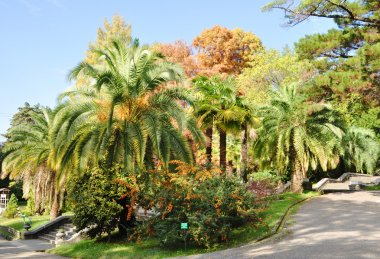 Palm-trees in a park