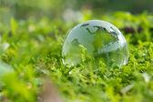 Fotografia mondo verde
