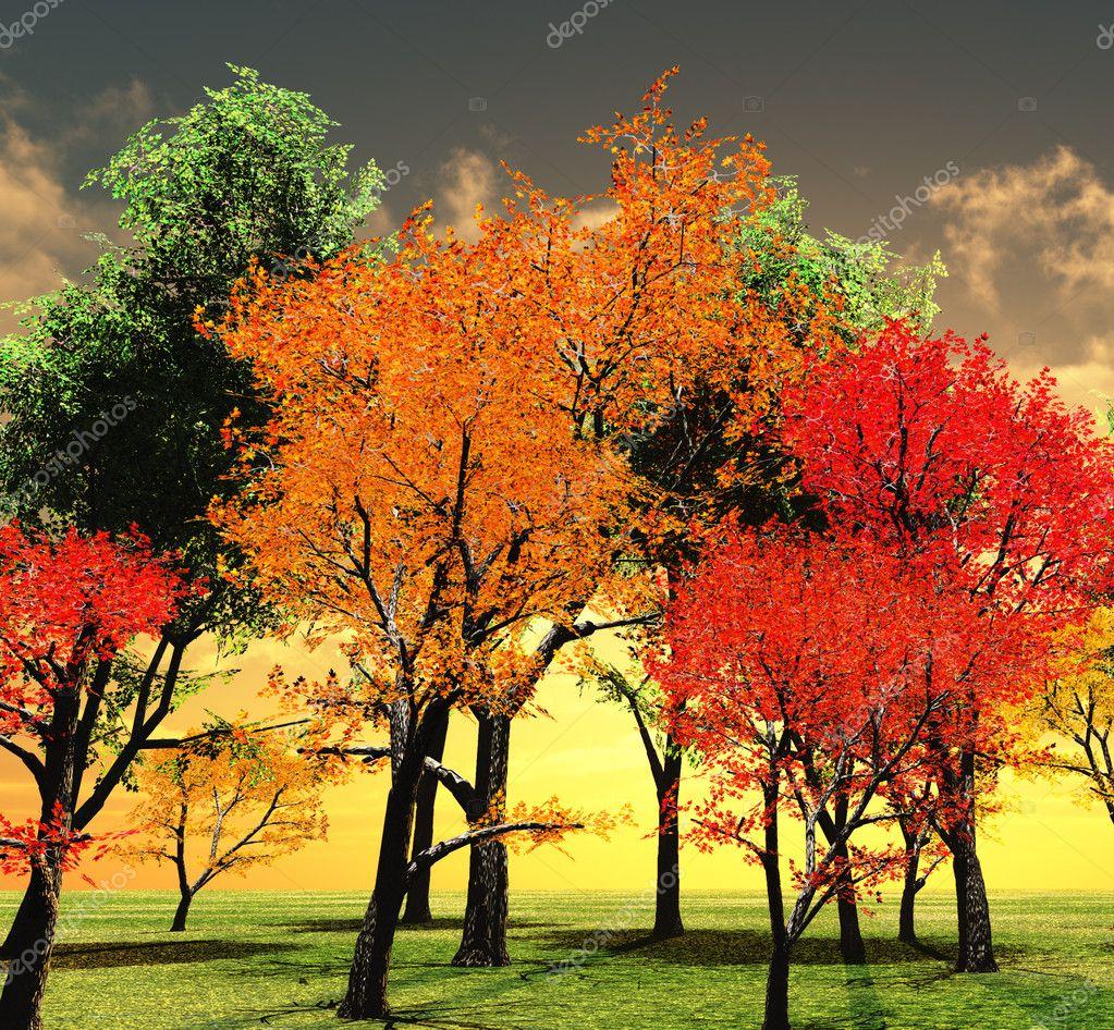 Autumn Trees Leaves Foliage Sunset | Foliage| Free Nature Pictures ...