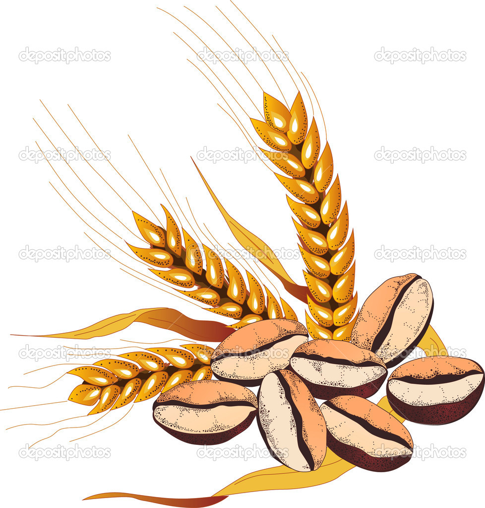 Vector illustration of coffee beans and wheat ears