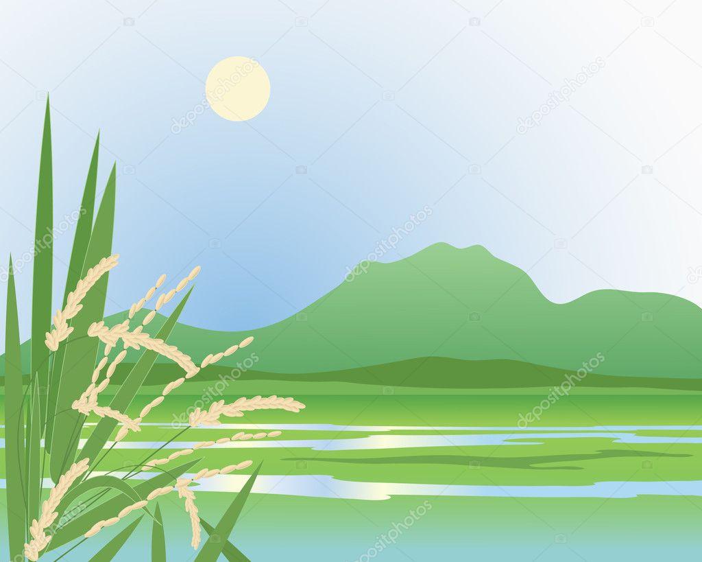 Paddy field background — Stock - 57.4KB