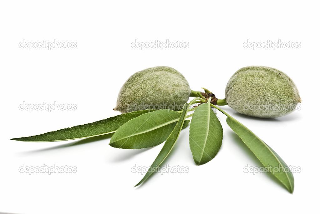 A pair of green almonds.
