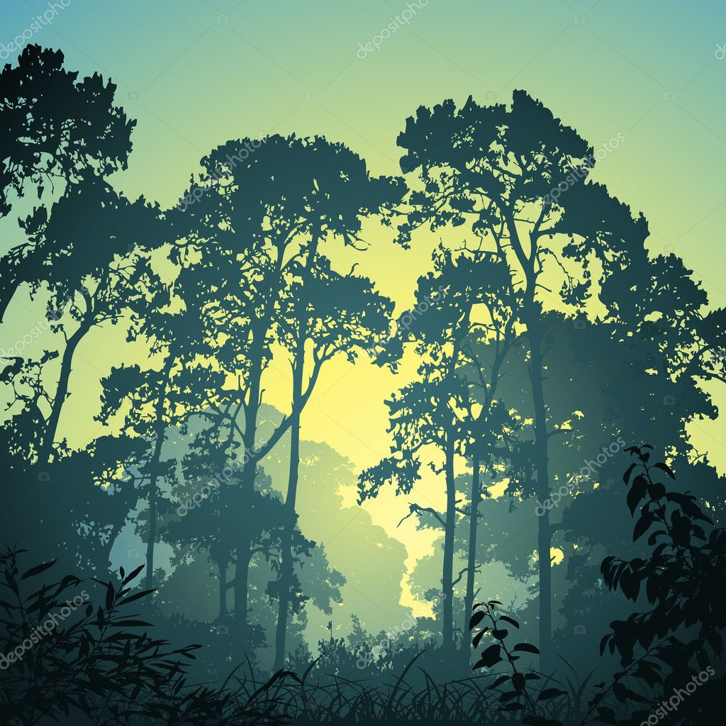 A Forest Landscape with Trees and Sunset Sunrise stock vector
