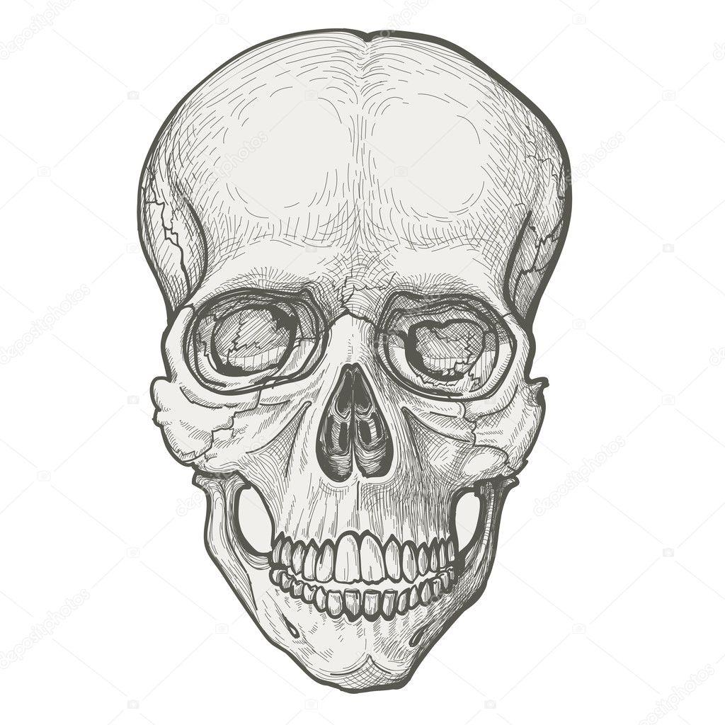 menschlicher Schädel zeichnen — Stockvektor © Danussa #6757685
