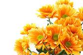 Fotografie Orange flowers Chrysanthemum