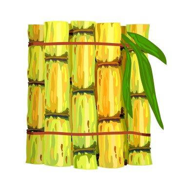 Stalks of sugar cane.