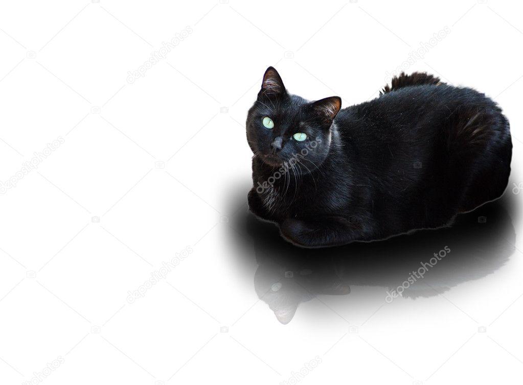 Černá kořist a kočička