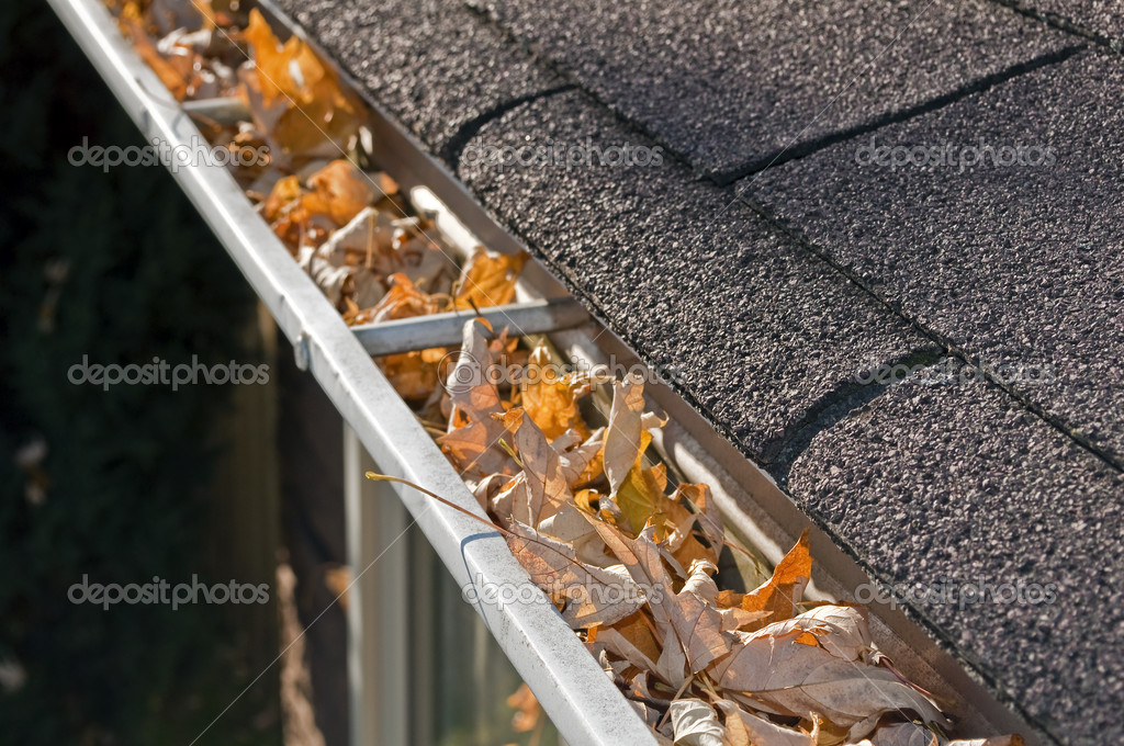 Leaves in rain gutter.