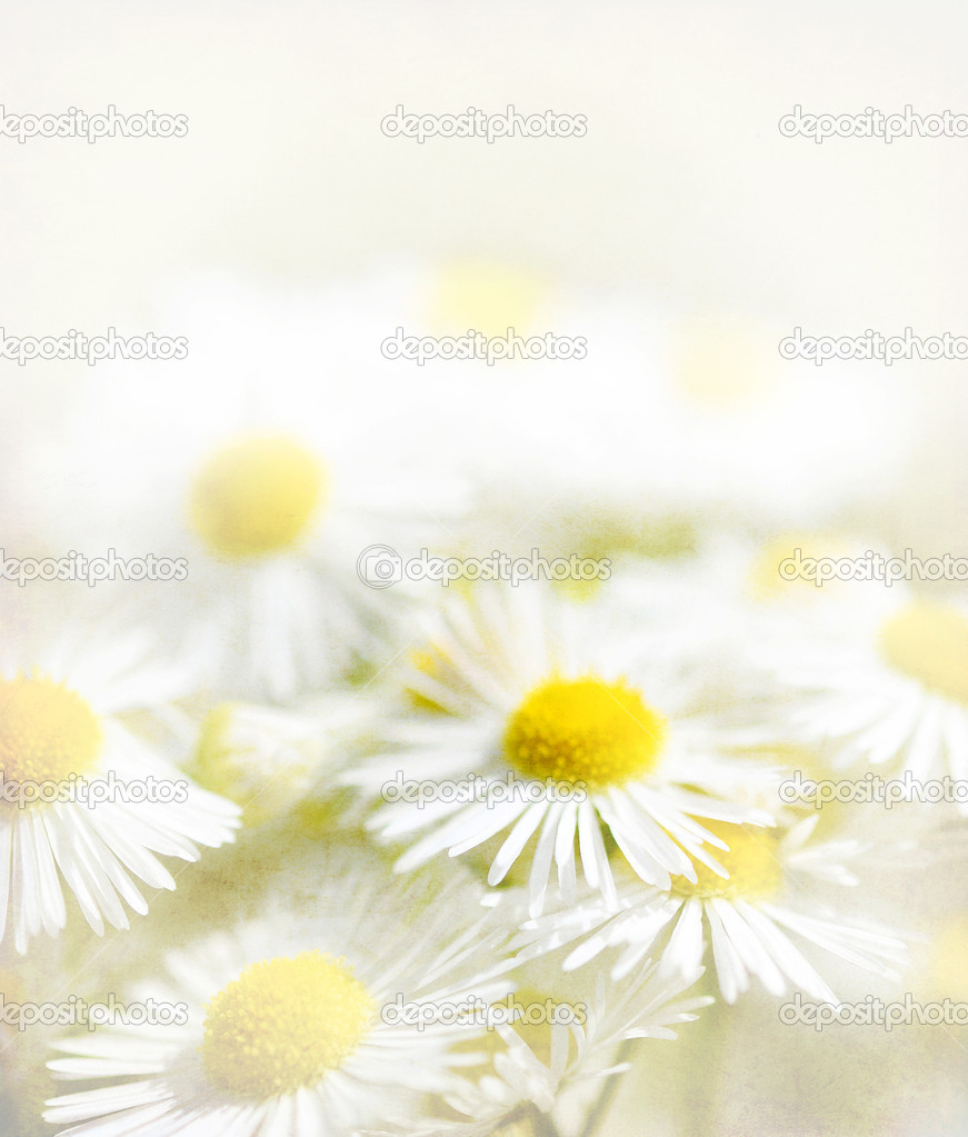 Daisy flowers, vintage background
