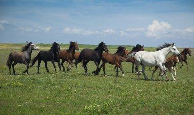 Horses Running / blue sky and green grass
