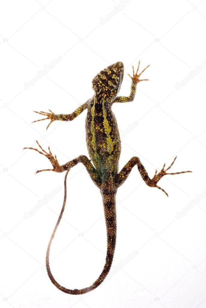 Animal Lizard Chinese Tree Dragon Stock Photo Panxunbin 6921784