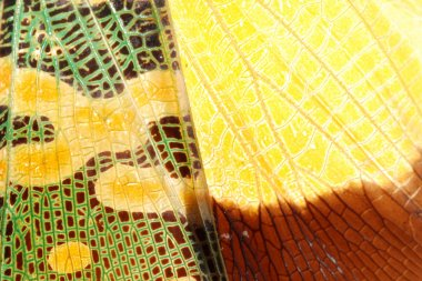 Cicada bug wing green and yellow texture