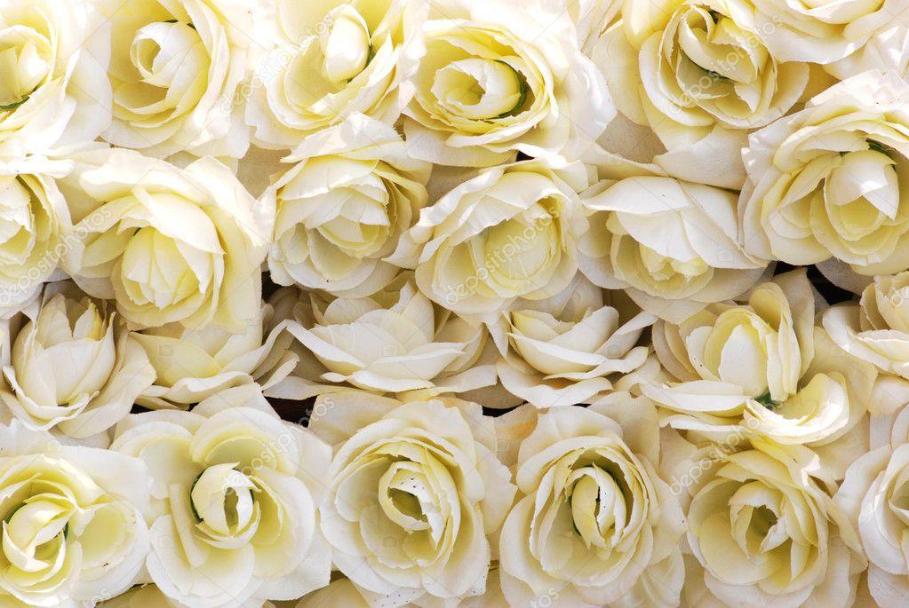 weisse rosen hintergrund stockfoto panxunbin 7223375. Black Bedroom Furniture Sets. Home Design Ideas