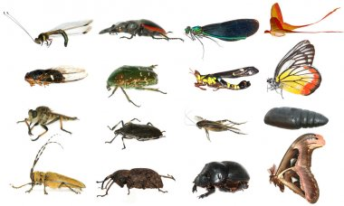 Wild animal insect set collection