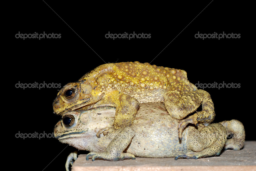 depositphotos_7329009-stock-photo-toad-m