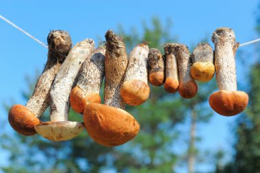 Mushrooms hanging on the rope