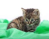 Fényképek aranyos cica