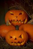 Fotografie Halloween dýně