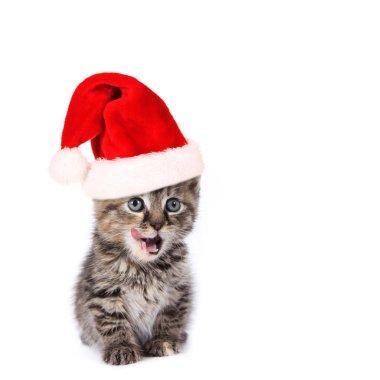 Christmas Santa cat