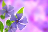 Photo Spring violet flower