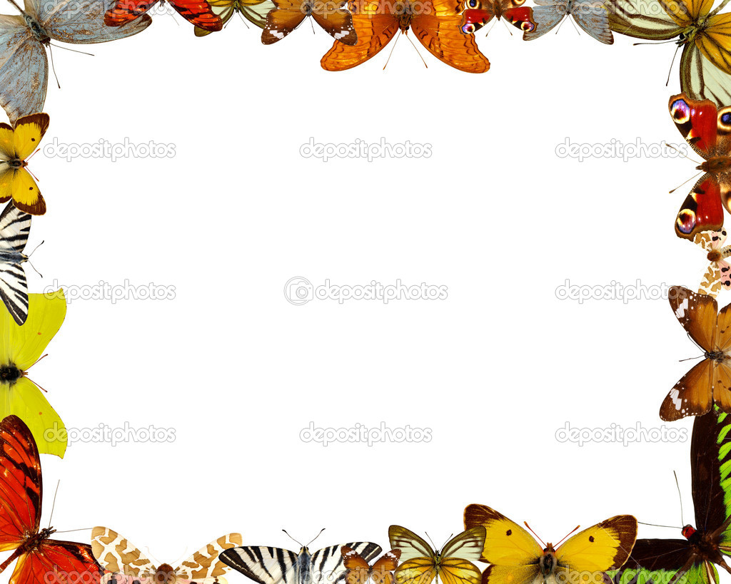 Exotic butterfly background