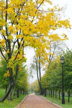 Autumn Alley Park, Moscow