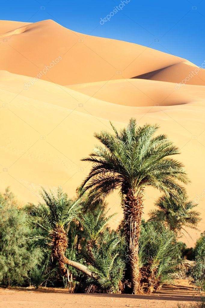 Oasis in desert
