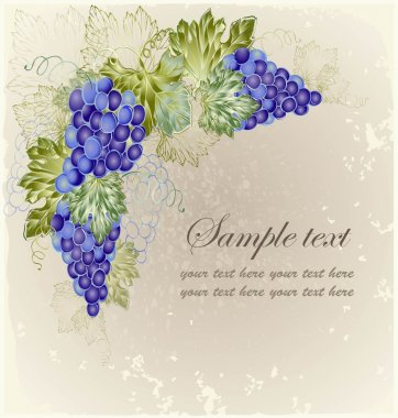 Vintage background with grape branch .