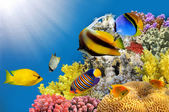 Foto einer Korallenkolonie auf einer Riffspitze