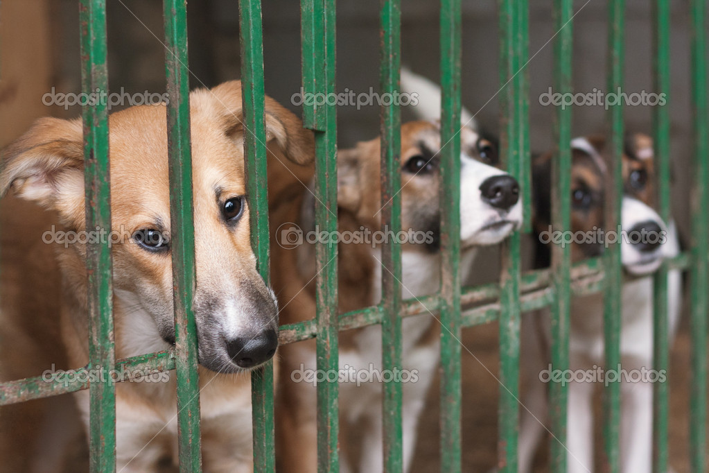 Puppies in the cage