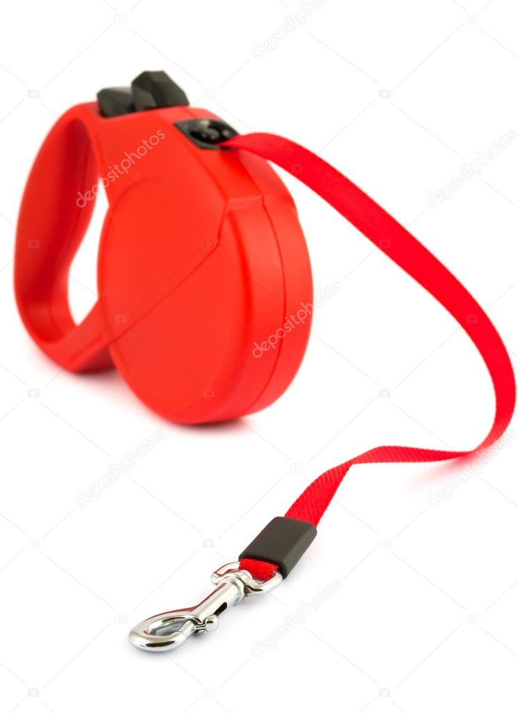 Red retractable leash for dog