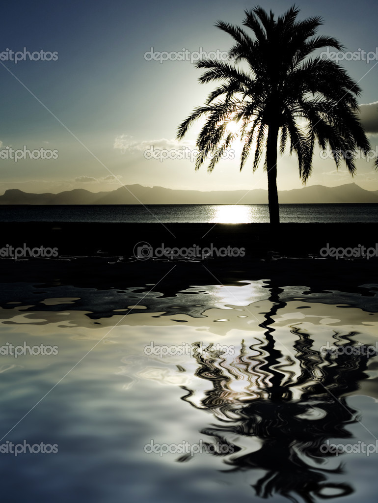 Palm tree at dawn or dusk reflected in the sea