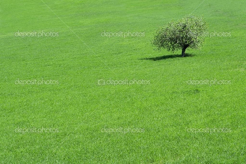 Green field with a solitary tree growing