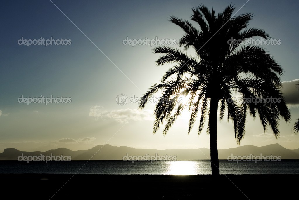 Beach in mallorca spain with palm tree and mediterranean sea
