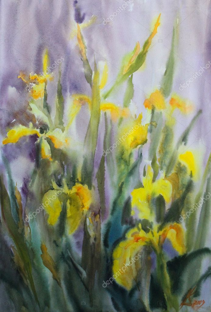 watercolor painting of the yellow iris flowers.  stock photo, Beautiful flower