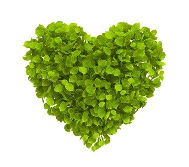 Green leaves heart
