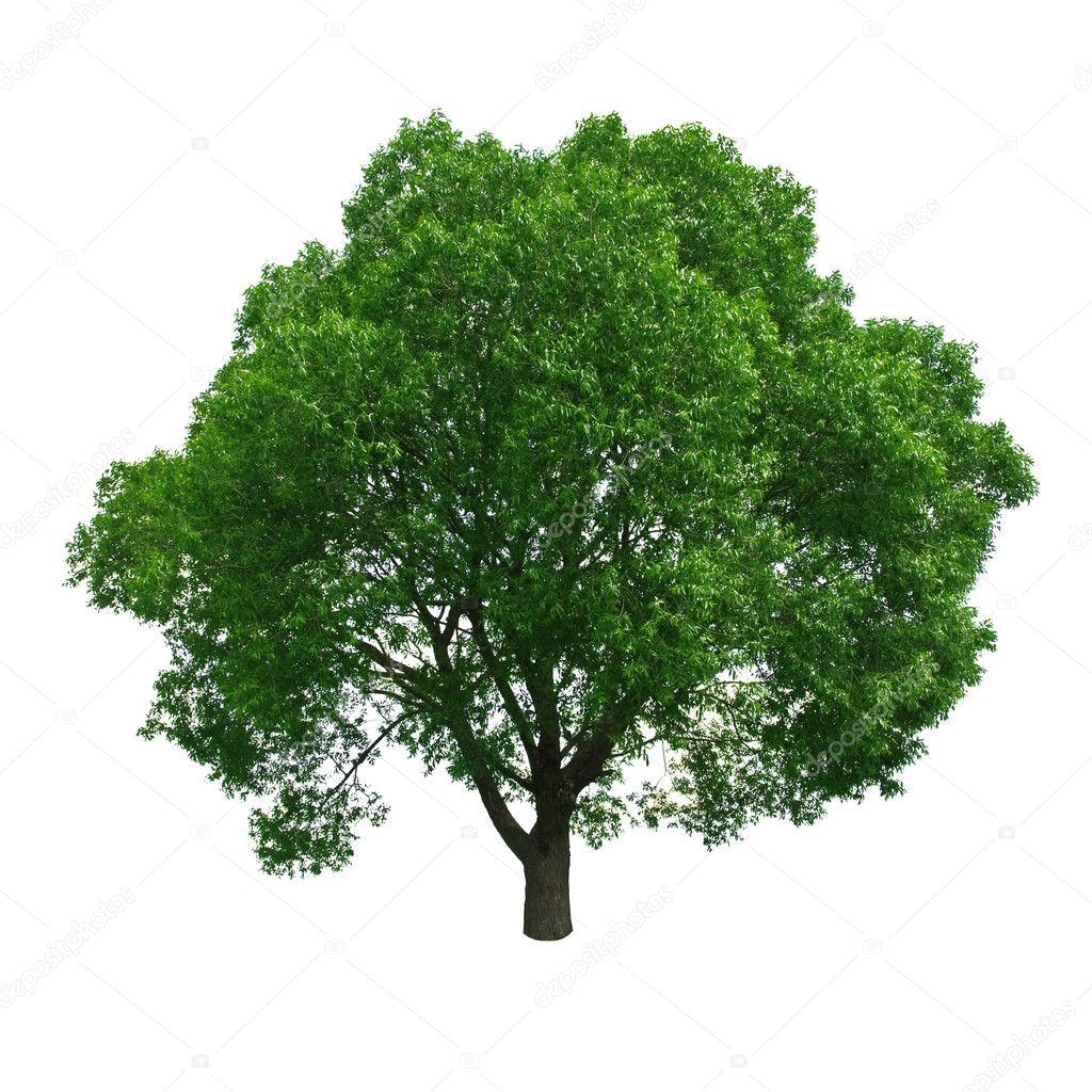 Фотообои Tree