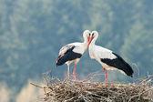 Fotografie Stork