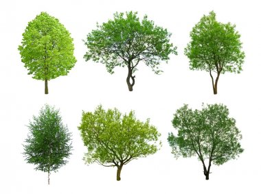 Different tree isolated on white stock vector