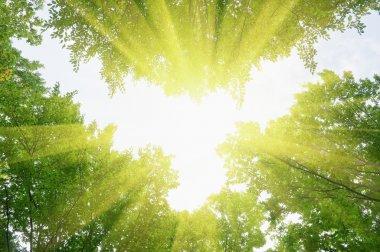 """Картина, постер, плакат, фотообои """"зеленые листья леса и луч солнца картины"""", артикул 7233235"""