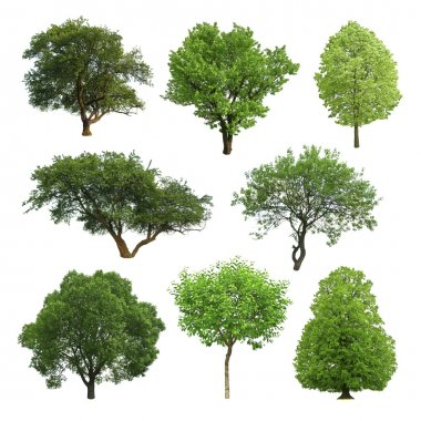 Collection of isolated summer tree stock vector