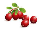 Brusinková ovoce