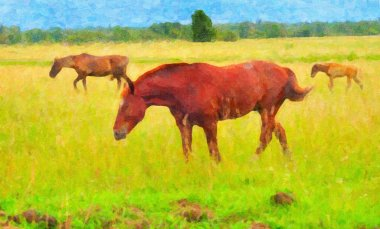 Picture three horses on a pasture