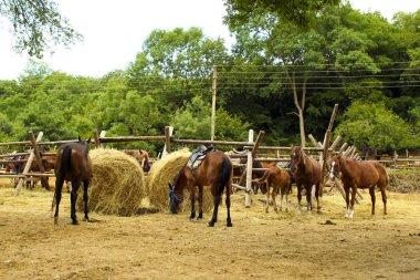 Stampeding horses.
